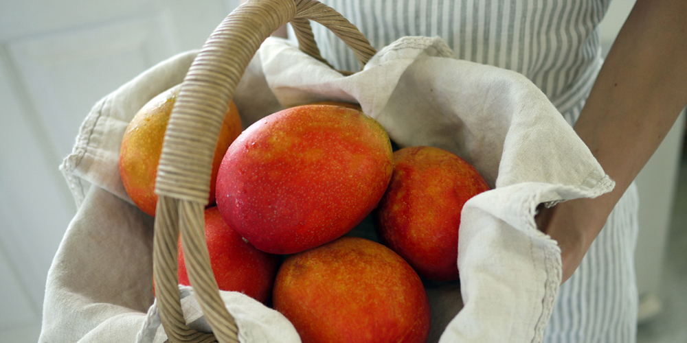泉農園のマンゴー